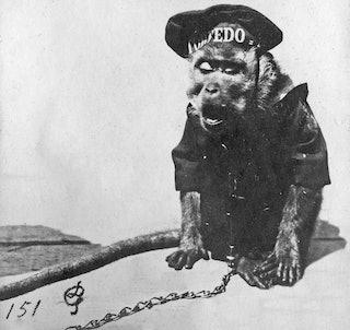 Aapje 'Torpedo', de mascotte van het Marinekorps Flandern