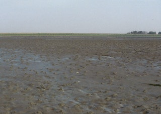 Weids uitzicht over een modderig schor.