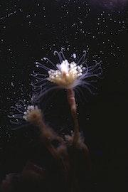 Close-up van een plantje onderwater.