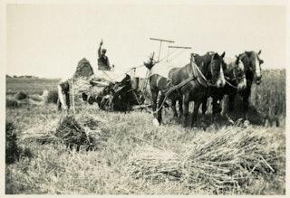 Wagen met twee paarden op tarweveld.